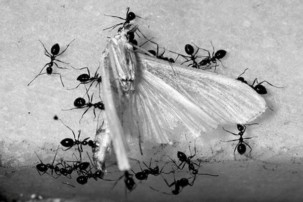 detractors photography of ants